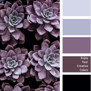 purple succulent color palettes
