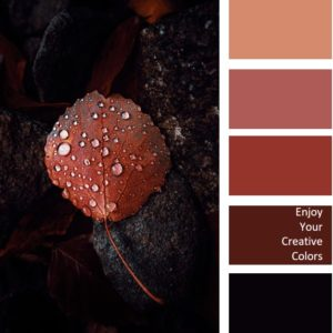 COLOR PALETTE #0201 - water droplets on brown rock